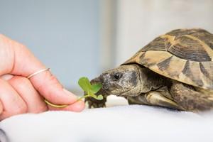 Cabinet vétérinaire d'Ecublens - prestations: consultations