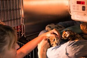 Cabinet vétérinaire d'Ecublens – prestations: hospitalisation