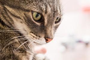 Cabinet vétérinaire d'Ecublens – prestations: laboratoire